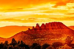 Cockscomb Golden Sunset