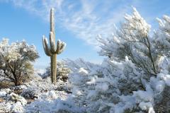 Cactus Snow